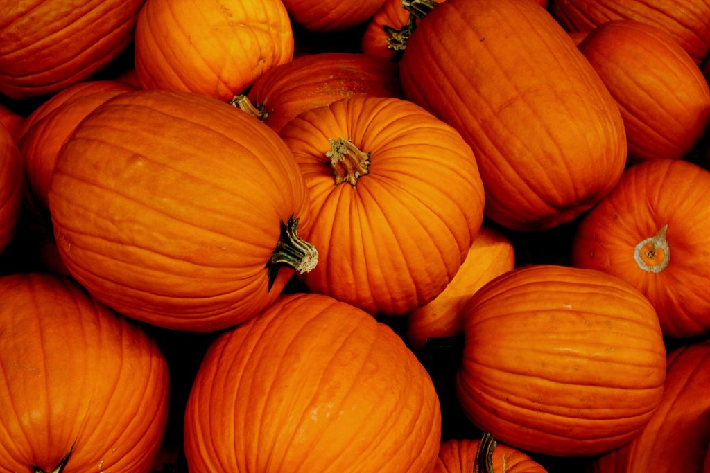 Pumpkin Waste News